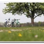 Поездка на велосипедах в Вакуленчук по полям и лесам!
